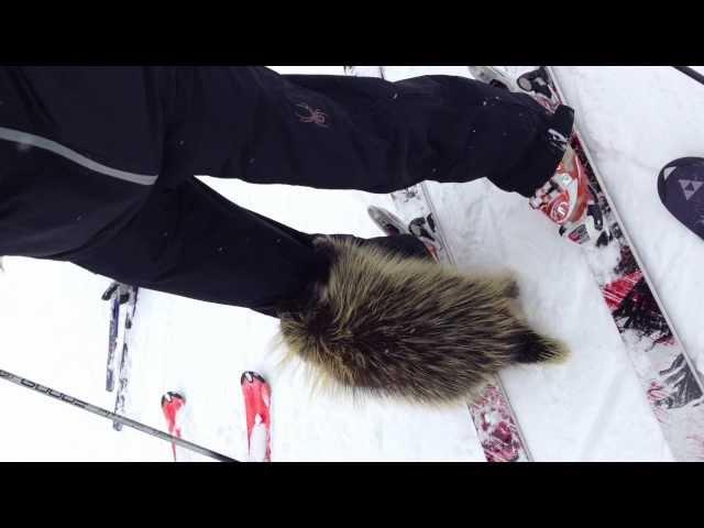 Porcupine Attacks Skier