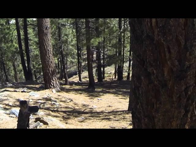 Gnarley Secret Tahoe Downhill Mountain Bike Trail