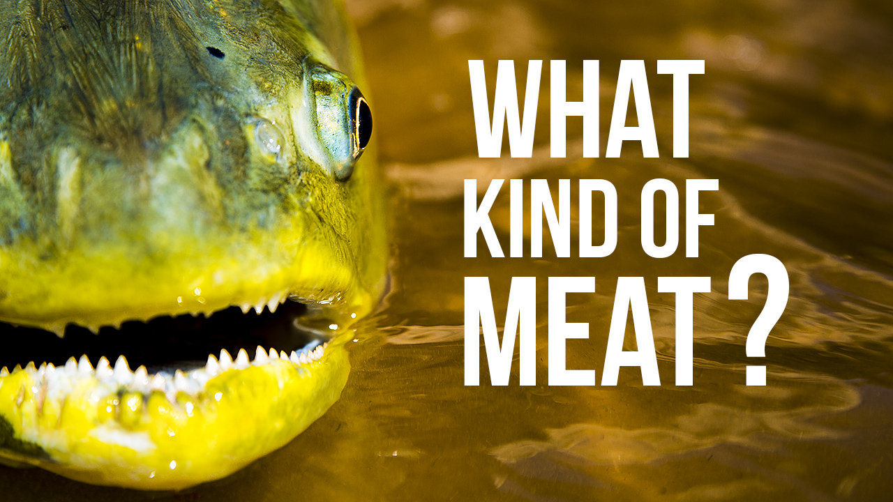 What kind of Meat ?