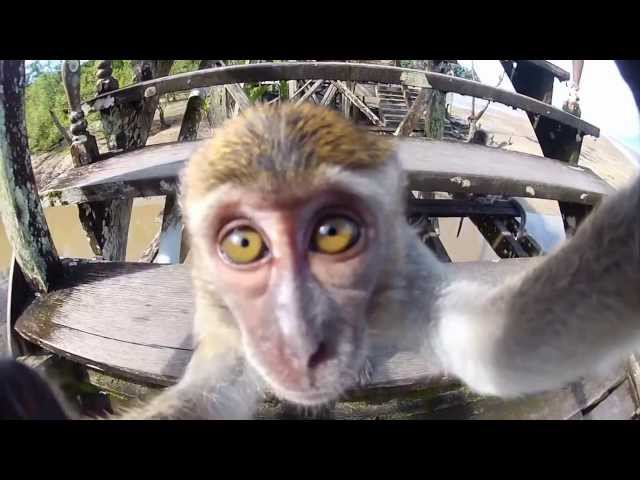 2014 Animals GoPro Compilation