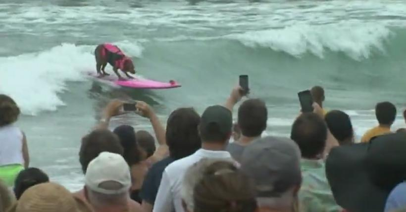 Surfing Dogs Raise Money for Humane Society