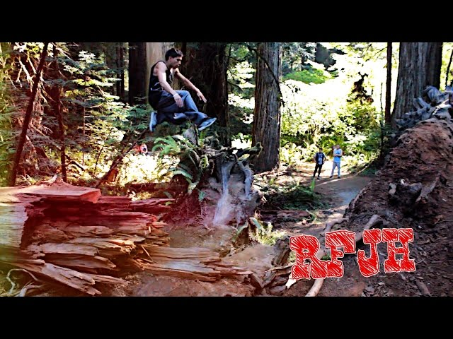 Redwood Forest Parkour/Freerunning!