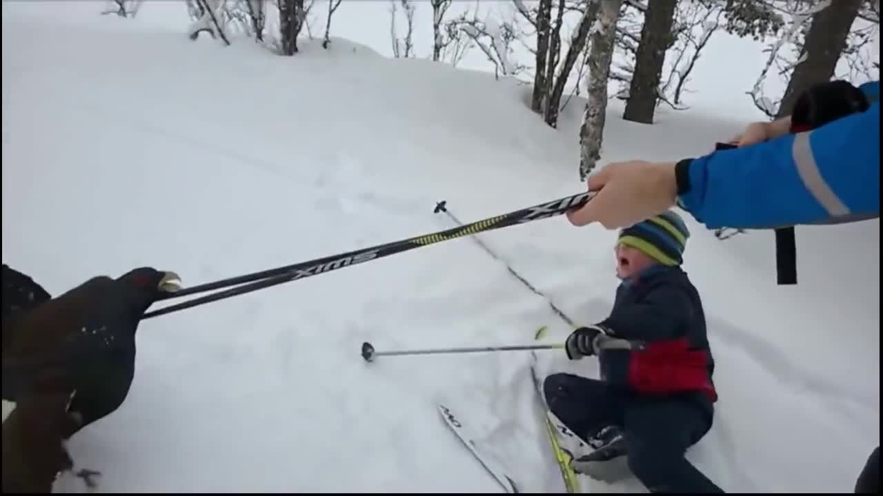 Thug Life Bird Attacks Skiers in Norway