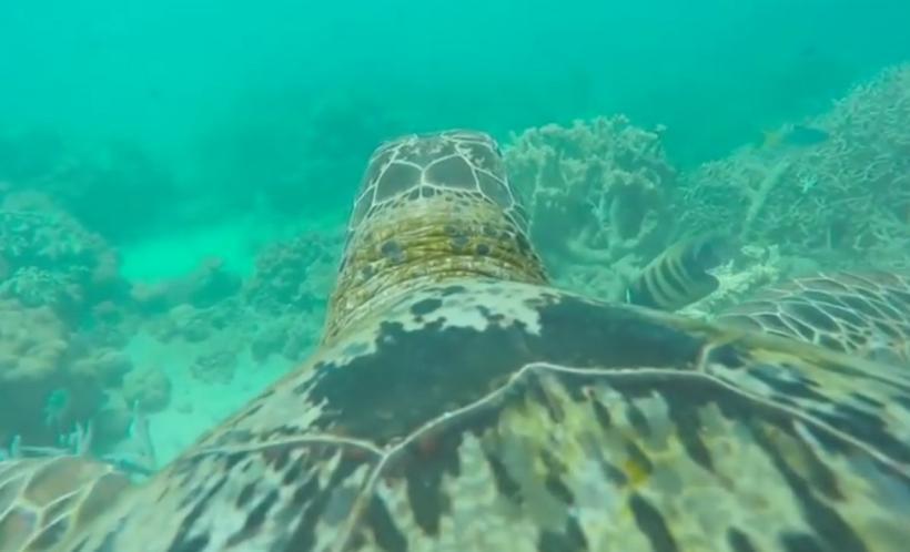 GoPro Turtle Cam