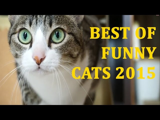 Best of Funny Cats 2015 | Love Cats | Smarts Cats