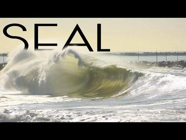 Seal   February 25th   2016