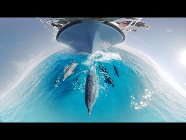 GoPro VR Swimming With Dolphins