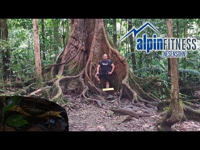 Maison de la forêt :: GUADELOUPE :: Caribbean