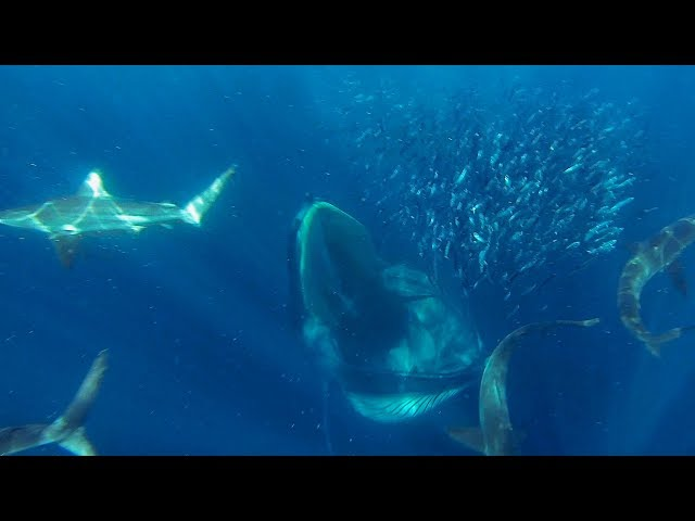 GoPro Awards: Sharks, Dolphins, Penguins and Whale