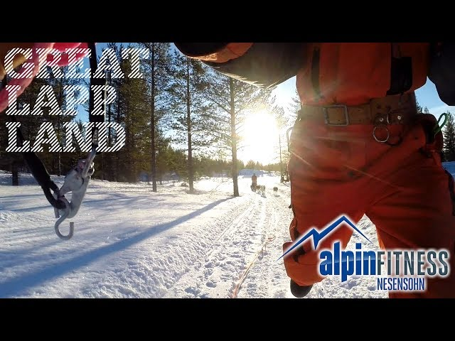 Dog Sled Adventure in Arvidsjaur, Swedish Lapland