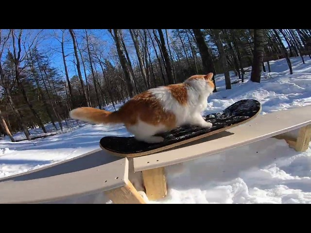 """Hustle To Meowtivate"" - Taddy Snowskate!"